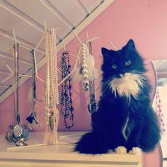 Cat & Jewlery