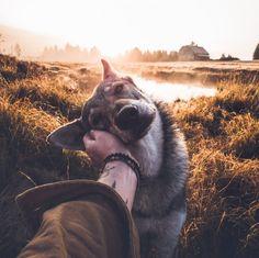 Animais Good Boy Dog Photos Related posts:What is white balance? Nature Animals, Animals And Pets, Funny Animals, Cute Animals, Boy Dog, Dog Mom, Czechoslovakian Wolfdog, Dog Tumblr, Photos Voyages
