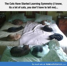 Funny pictures about That's A Lot Of Cats. Oh, and cool pics about That's A Lot Of Cats. Also, That's A Lot Of Cats photos. Cute Funny Animals, Cute Cats, Funny Cats, Funny Minion, Puppies And Kitties, Cats And Kittens, Kitty Cats, Dogs, Crazy Cat Lady