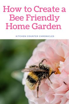 We love bees! Filled with bee friendly plant lists, tips and tricks to supporting bees and other pollinators, in your home garden.