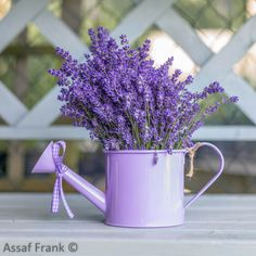 Assaf Frank   Caption	- Watering can with Lavender flowers