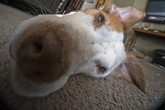 https://flic.kr/p/GNAPte | Macro Dog Face