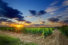 Domaine Combier celebrates half a century of Organic Farming - Vitabella