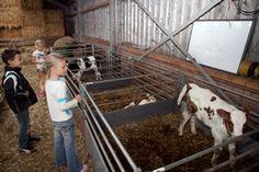 Zorgvrij is een veeteeltbedrijf met een educatieve functie. Hoewel de naam misschien anders doet vermoeden is Zorgvrij geen zorgboerderij. In de winter staan de koeien op stal en mogen ze gevoerd worden met koeienkoek. Bijna altijd zijn er kalfjes te zien maar er zijn ook geiten, varkens, kippen en konijnen. Dagelijks is verse melk te koop. Er zijn diverse leuke (kinder-)activiteiten.