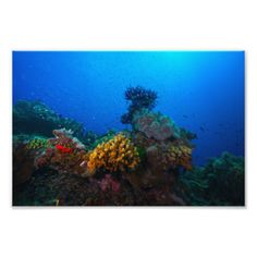 Colorful Coral Sea Photo Print featuring abundant schools of tropical fish and a vast array of vividly colored soft and hard corals. The photo was shot on Australia's Great Barrier Reef. #colorful #beauty #reef #coral #ocean #sea #tropical #fish #coral #sea #coral #reef #great #barrier #reef