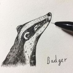 A nosy badger on DAY 26 of #100animals100days ... I really don't know if I'll last to the big 100  . . . #wildlife #badger #animal #artist #art #sandradieckmann #illustration #drawing #painting #mixedmedia #ink #illustrator #drawing #dailydrawing