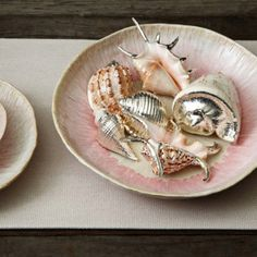 Seashell display...sweet...love that you can pick them up and touch them