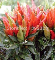 100pcs 100% Organic Candlelight Pepper Seeds vegetables seeds