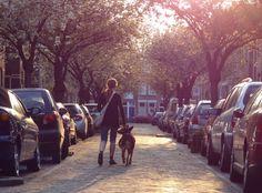 La foto corresponde a la primavera en una calle de Utrecht. (Países Bajos) Foto: Pelocha. [Envía tu foto por correo mailto: zona20@20minutos.es o por twitter #Primavera20m]