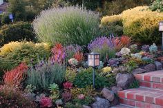 A Mediterannean Garden - deer-resistant, drought tolerant plants to cover this sloping front yard in El Cerrito, California. Succulents (including vivid coral 'Sticks on Fire' euphorbia) mingle with California natives and easy-care, Mediterranean shrubs—lavender, rosemary, sage. The garden takes just 4 hours per month to maintain!