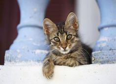 Det er skønt at være kat i den lune sommer, men som katteejer skal du være opmærksom på, at din kat ikke får det for varmt, eller spiser for lidt. (Foto: Colourbox)