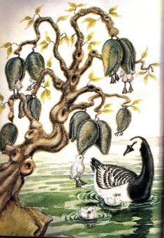 barnacle tree myth - Google zoeken