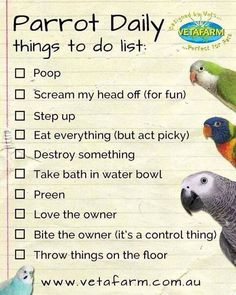 Daily list - Parrot                                                                                                                                                                                 More