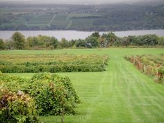 Vineyards near Geneva, NY  Jim and I try to go every year and have the best time