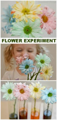 Flower Experiment for Kids- a fun & magical way for kids to learn about flowers and how they thrive {A great experiment for Spring} DIY, Crafts, Projects and Tutorials Children's Activities Science Fair Projects, Science Experiments Kids, Science For Kids, Science Labs, Science Fun, School Projects, Spring Activities, Craft Activities For Kids, Crafts For Kids
