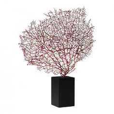 Red Sea Fan with Base $67.50