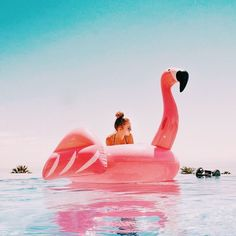 "cupcakekristie: "" flamingo float """