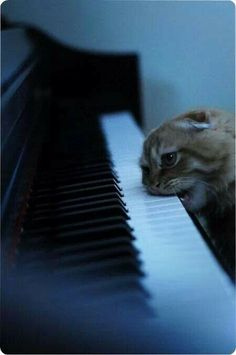 Sing us a song, you're the piano man, sing us a song tonight.