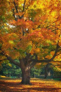 ~~Au0tumn Colours ~ - Favorite Photoz