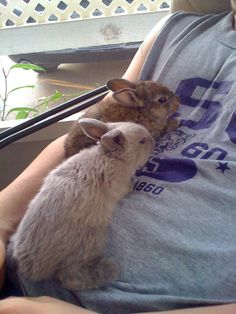 our old bunnies we used to have..