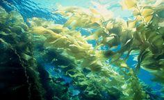 00beneficios-das-algas-marinhas