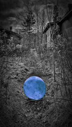 On An Eerie Path - Dimtry Miochnik 500px.com
