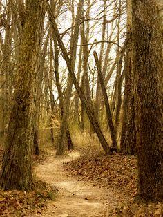 The Path I chose