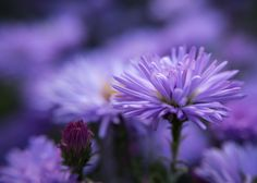 autumn like violet by Halina Larsson on 500px