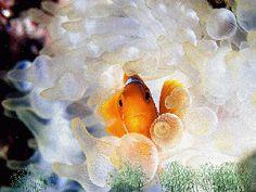океанская жизнь