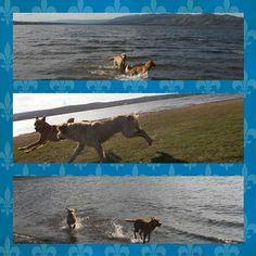 Al igual que mamá amamos pasear y amamos el agua... Descubrimos un lugar que nos encanta! Chaco & Luna #instadog #Tardeperfecta #airelibre #lago #lasmejorescosasdelavidasongratis