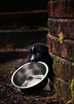 crescentmoon animalia Magnificent Beasts, Dog Eyes, Beautiful Images, Dog Bowls, Dog Cat, Cute Animals, Things To Come, Tumblr, Puppies