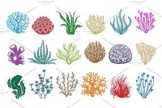Seaweeds and corals on white. Colored aquarium plants vector illustration, color underwater sea weeds and ocean coral icons - Buy this stock vector and explore similar vectors at Adobe Stock Underwater Plants, Ocean Underwater, Underwater Painting, Sea Plants, White Plants, Plant Illustration, Graphic Illustration, Illustrations, Coral Art