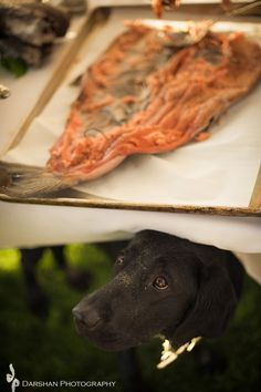 www.darshanphotography.com Wedding Photography, River, Weddings, Pets, Food, Wedding, Essen, Meals, Wedding Photos