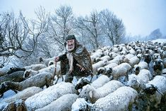 Old Shepherd by Saeed Barikani | 24 Winners From The Sony World Photography Awards