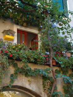 Grape Arbor and Flowers, Lake Garda, Malcesine, Italy Photographic Print by Lisa S. Engelbrecht at Art.com