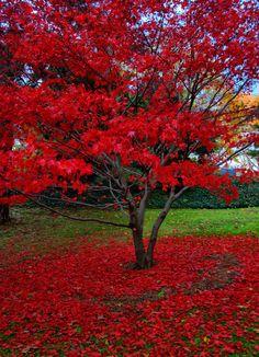 Mt Auburn Cemetery | Flickr - Photo Sharing!