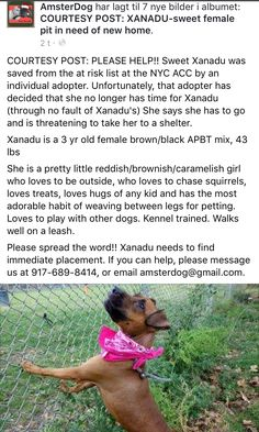 1/2/17 COURTESY POST!! PLEASE SHARE!! ADOPTER FAILING XANADU!! /ij https://m.facebook.com/photo.php?fbid=1662474327099921&id=188822201131815&set=a.1662463713767649.1073742353.188822201131815&refid=52