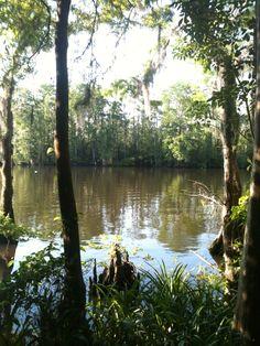 Lake in Tchefuncta.  Covington, Louisiana