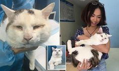 Homeless cat 'without eyelids' saved from losing its sight