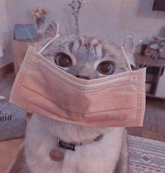 Cute Kawaii Animals, Cute Funny Animals, Cute Black Cats, Cute Cats, Kittens Cutest, Cats And Kittens, Cat Profile, Kitten Wallpaper, Cute Cat Memes
