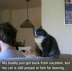 My cats. Every time I leave!
