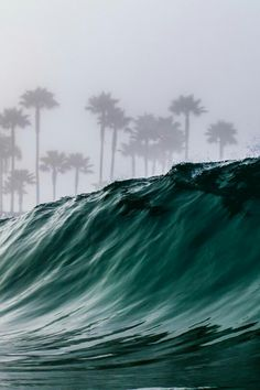 Tropical Swell