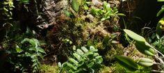 Orchidarium Planting List - Pumpkin Beth Indoor Ferns, Indoor Plants, Miniature Orchids, Bottle Garden, Terrarium Plants, Orchid Care, Planting, House Plants, Beautiful Homes
