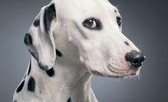 Ritratti animali - Regno Unito - The Post Internazionale