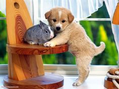 cute puppy and rabit