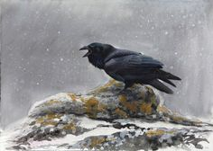 Cry From the Darkness (Raven) - Lars Jonsson - watercolor Wildlife Paintings, Wildlife Art, Bird Paintings, Uppsala, Bird Artists, Watercolor Bird, Watercolour Painting, Bird Illustration, Book Illustrations