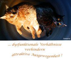 ... dysfunktionale Verhältnisse verhindern attraktive #Ausgewogenheit !