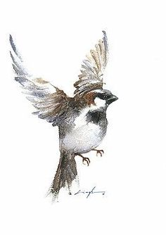 Flying sparrow watercolor by Nitin Singh A selection of bird photos Sparrow Drawing, Sparrow Art, Watercolor Bird, Watercolor Animals, Watercolor Paintings, Flying Bird Drawing, Bird Drawings, Guache, Drawing Artist