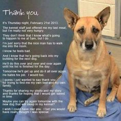 They wait...please share her story If we all join together we can make a difference in ending #AnimalAbuse