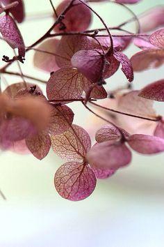 ღ Autumn plum leaves Plum Purple, Shades Of Purple, Pink Brown, Burgundy, Purple Colors, Purple Haze, Foto Nature, Hortensia Hydrangea, Hydrangeas